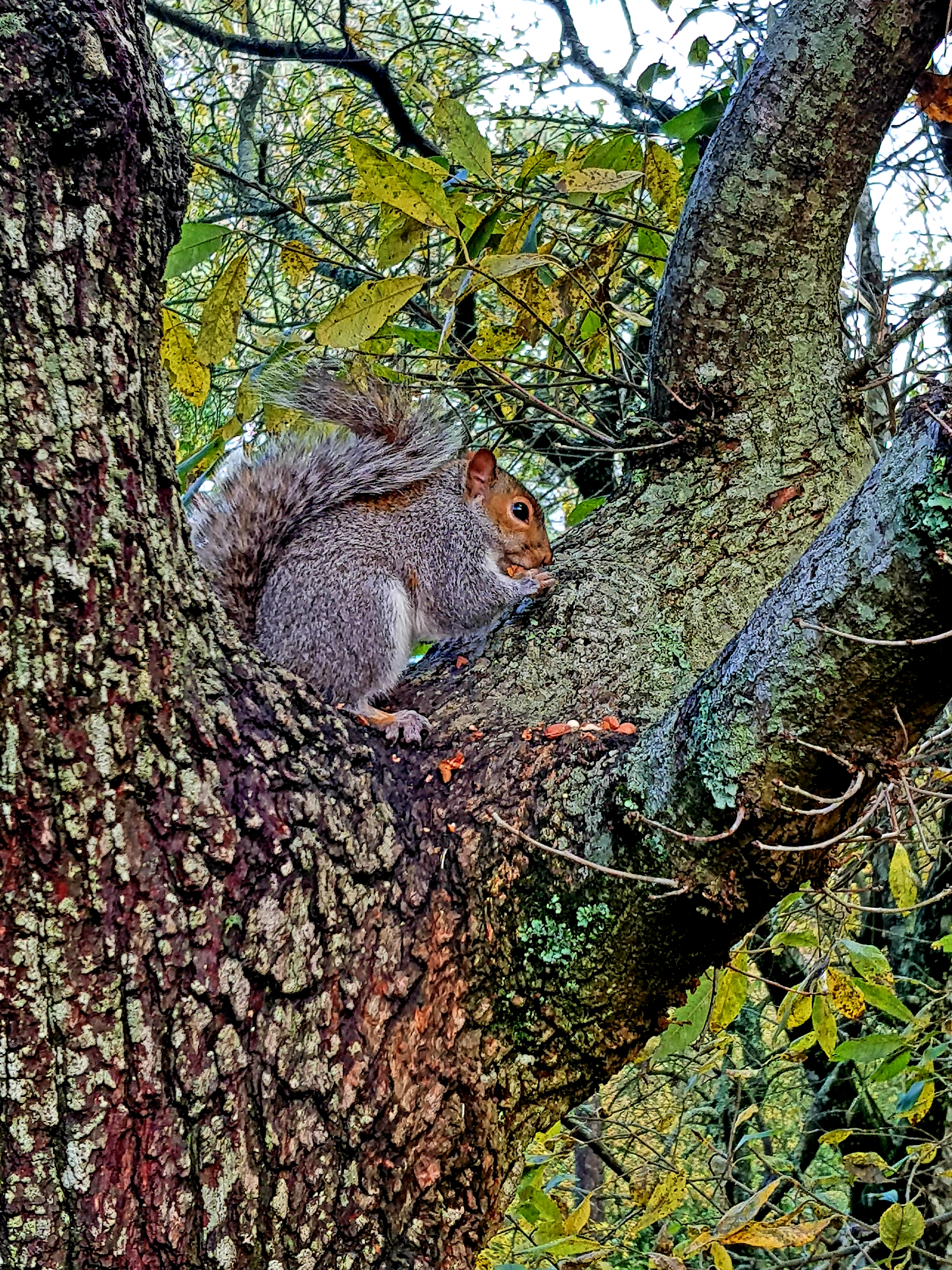 Wildlife Walks at Stover Country Park Nature Reserve, Newton Abbot